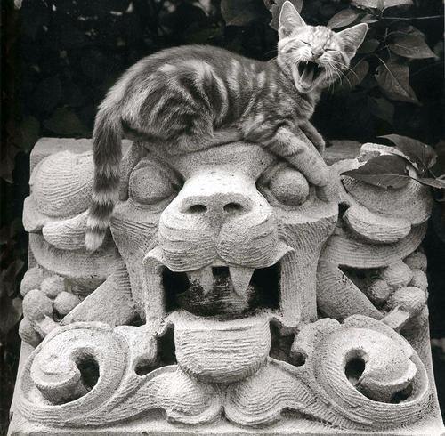 Funny Kittens
